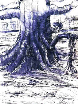 Banyan Tree - Jerry Garcia - Limited Edition  Lithographic reproduction  of drawing in ink and wash